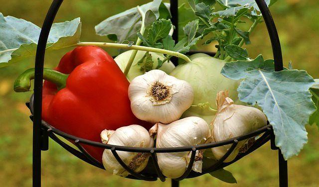 propiedades del ajo el ajo