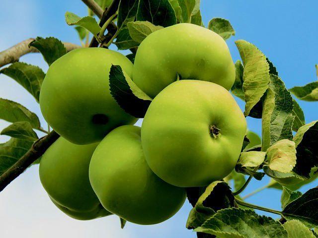 manzana beneficios propiedades