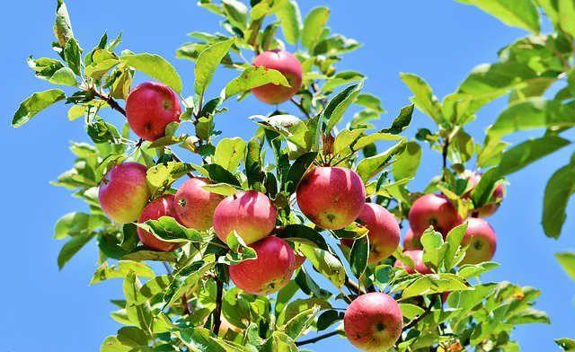 manzana beneficios usos